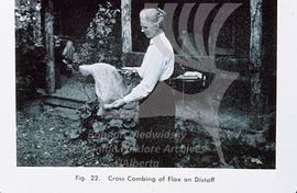 Cross combing of flax on distaff
